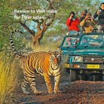 Reason to Visit India for Tiger safari