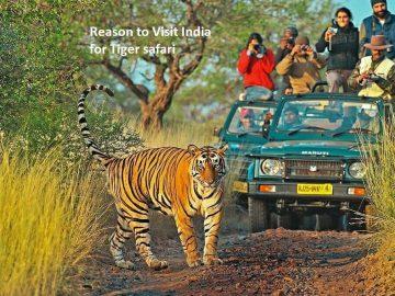 Reason to Visit India for Tiger safari