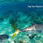 Top Ten Places to Snorkel