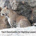 leopard sanctuary in-india