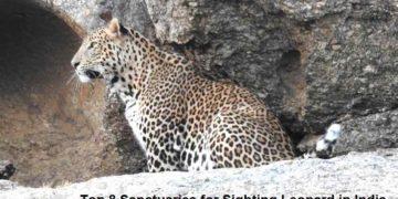 leopard sanctuary in-india